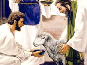 Lamb and Bowl