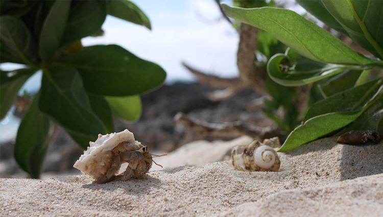 suumo-hermit-crab-img_02
